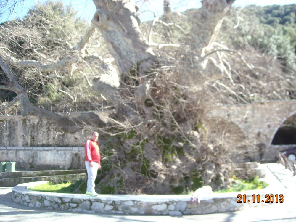 Крит - деревня Краси - старый платан